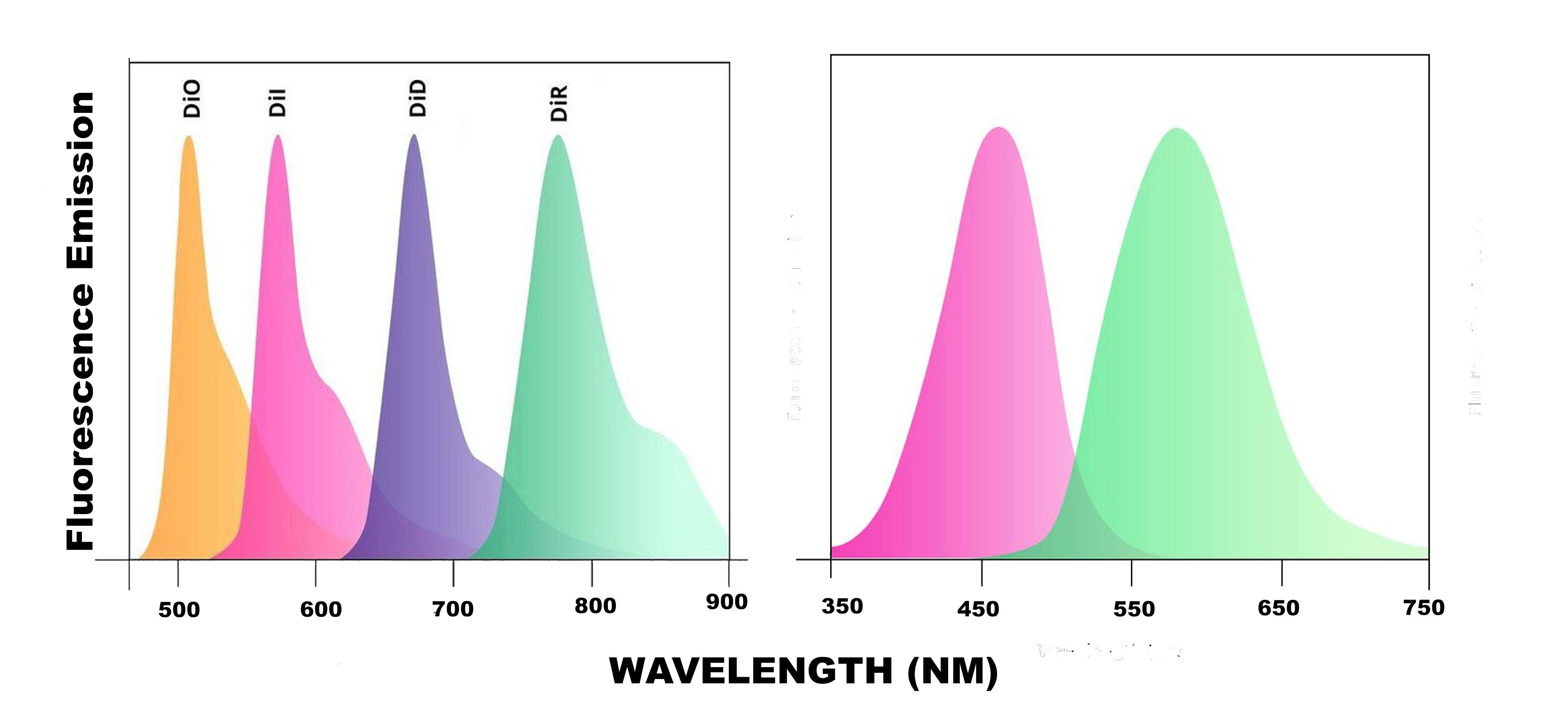Five-Color Fluoroliposome® Kit - Encapsula NanoSciences
